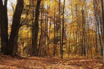 The autumnal gold forests of Ontario, captured as slow film by Artful Productions - Slow Film / Slow TV Central