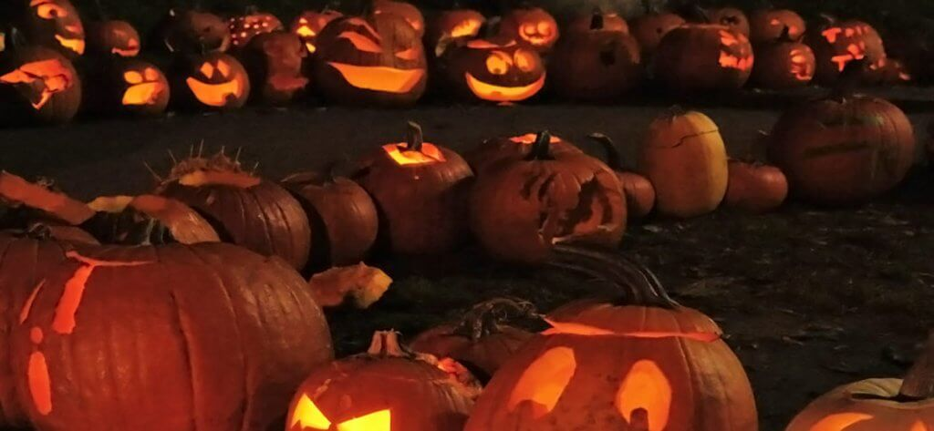 Pumpkins On Parade - a Slow TV film as caught by Artful Productions