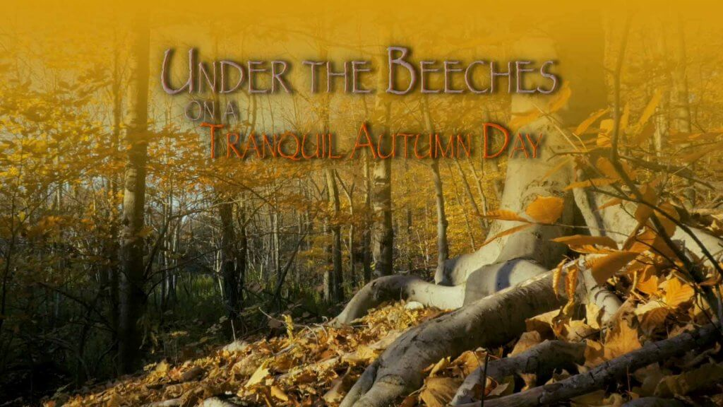 Under the Beeches on a Tranquil Autumn Day slow film